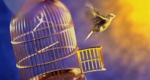 Раскрытие альтернативных ростков судьбы и дайс-технологии